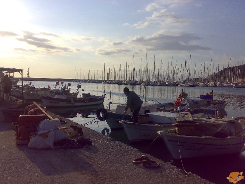 Утро на рыбном рынке