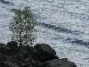 Пугачев Дмитрий. Набегающая волна
